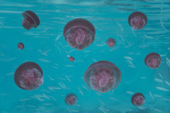 Jellyfishes in the sea Stock Image