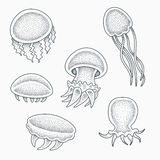 Jellyfishes tattoo design. Small baby jellyfishes vector illustration. Blackwork dotwork tattoo design royalty free illustration