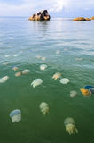 Jellyfishes in Thai sea Stock Photos