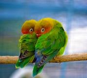 Jene reizenden kleinen Vögel Stockbild