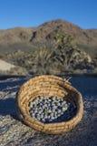 Jeneverbessen in mand in woestijn worden verzameld die stock foto