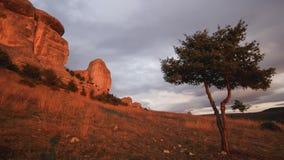 Jeneverbessenboom op een heuvel met wolken die hierboven lopen stock footage