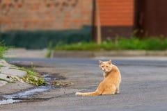 Jengibre o gato mullido rojo en la calle Imágenes de archivo libres de regalías
