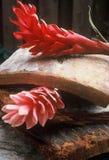 Jengibre rojo Fotos de archivo libres de regalías