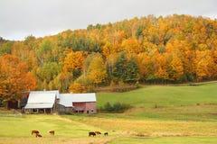 Jenne Bauernhof Stockbilder
