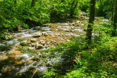 Jennings Creek um córrego popular da truta - 2 imagem de stock