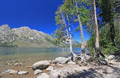 Jenny Lake in Grand Teton royalty free stock photo