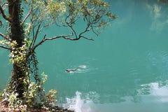 Jenonlan使蓝色湖陷下 库存照片