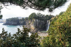 Jeongbang waterfall. View in the distance framed by the trees and pine tree. Jeju Island, South Korea Royalty Free Stock Photo