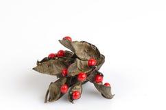 Jequirity seeds. Stock Photo