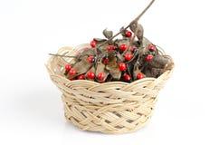 Jequirity seeds. Stock Image