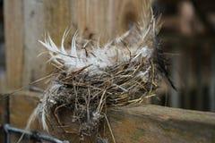 Jerarquía abandonada del ` s del pájaro en un granero viejo Fotografía de archivo