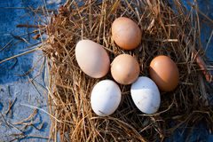 Jerarquía con los huevos orgánicos Fotografía de archivo