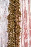 Jerarquía de la abeja en un granero Imagen de archivo libre de regalías
