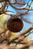 Jerarquía de la abeja en una rama de un árbol Foto de archivo