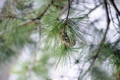 Jerarquía de la avispa en el árbol Fotos de archivo