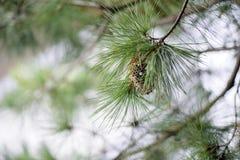 Jerarquía de la avispa en el árbol Imágenes de archivo libres de regalías