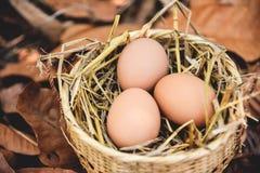 Jerarquía de la cesta de los huevos del pollo con el fondo seco de las hojas de otoño fotos de archivo libres de regalías