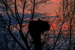 Jerarquía de la cigüeña en fondo de la puesta del sol fotos de archivo libres de regalías