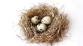 Jerarquía de la paja con los huevos de codornices