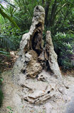 Jerarquía de la termita Imagenes de archivo