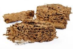 Jerarquía de la termita Foto de archivo