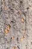 Jerarquía de la termita en corteza de árbol Fotos de archivo libres de regalías