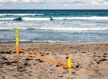 Jerarquía de la tortuga de mar foto de archivo libre de regalías