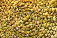 Jerarquía de los capullos del gusano de seda Imagen de archivo
