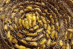 Jerarquía de los gusanos de seda en la cesta de bambú Fotografía de archivo
