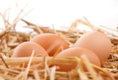 Jerarquía de los huevos de Brown Foto de archivo
