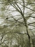 Jerarquía de los pájaros en árboles Fotos de archivo libres de regalías
