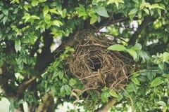 Jerarquía de los pájaros en un árbol fotos de archivo
