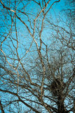 Jerarquía de los pájaros en un árbol Imágenes de archivo libres de regalías