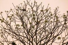 Jerarquía del árbol foto de archivo