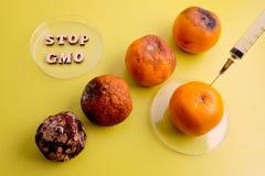 Jerarquía del mandarín estropeado cambiando el tipo genético de feto Alineado como símbolo del por ciento PARADA GMO en una placa fotos de archivo libres de regalías