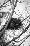 Jerarquía del pájaro Imagenes de archivo