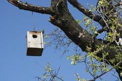 Jerarquía del pájaro Fotos de archivo libres de regalías