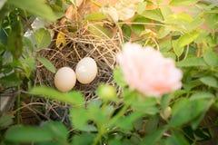 Jerarquía del pájaro con los huevos Fotografía de archivo libre de regalías