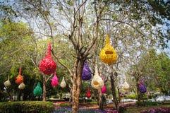 Jerarquía del pájaro de la lámpara en el árbol Fotos de archivo