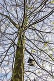 Jerarquía del pájaro en las ramas de árbol fotografía de archivo