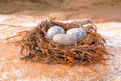 Jerarquía del pájaro y creación abstractas de los huevos imágenes de archivo libres de regalías
