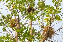 Jerarquía en el árbol Fotografía de archivo
