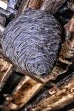 Jerarquía grande de la avispa en el ático de un cierre de la casa de campo para arriba Imagen de archivo