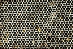 Jerarquía muerta de la abeja que cae en el fondo y la textura de tierra Fotos de archivo