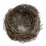 Jerarquía natural real vacía del pájaro imagen de archivo libre de regalías