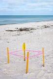 Jerarquía protegida de la tortuga de mar Fotografía de archivo
