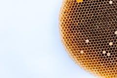 Jerarquía seca y vacía de la abeja en copyspace del Libro Blanco Fotografía de archivo libre de regalías
