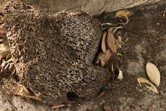 Jerarquía secada vieja de la abeja Imagenes de archivo
