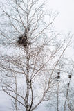 Jerarquía vacía del ` s del pájaro en ramas del árbol de abedul en marzo Imagen de archivo